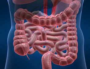 Digestive system image